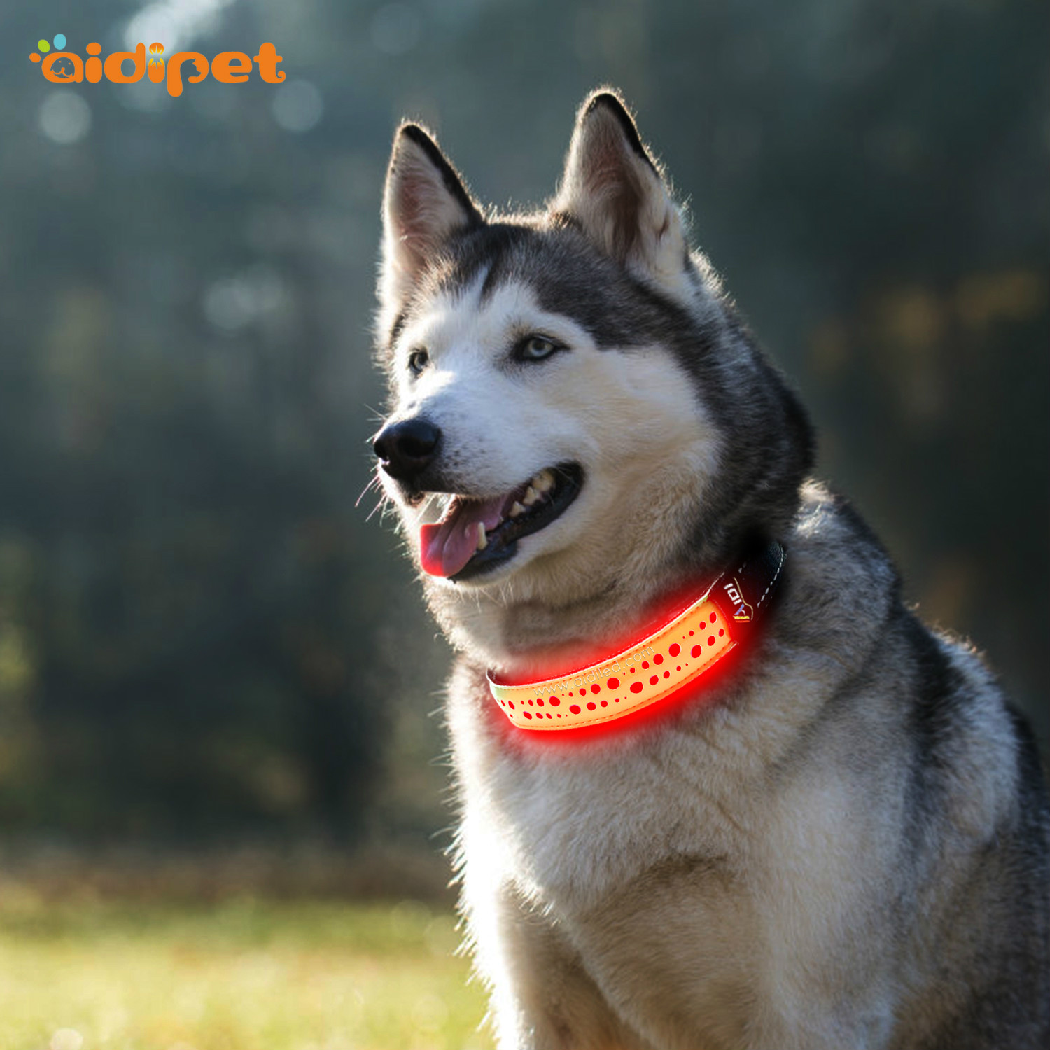 AIDI-C14 Rechargeable Lighted Dog Collars