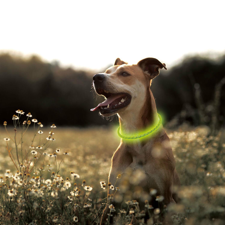 AIDI-C2 New Style Bright Light Nylon Led Dog Collar